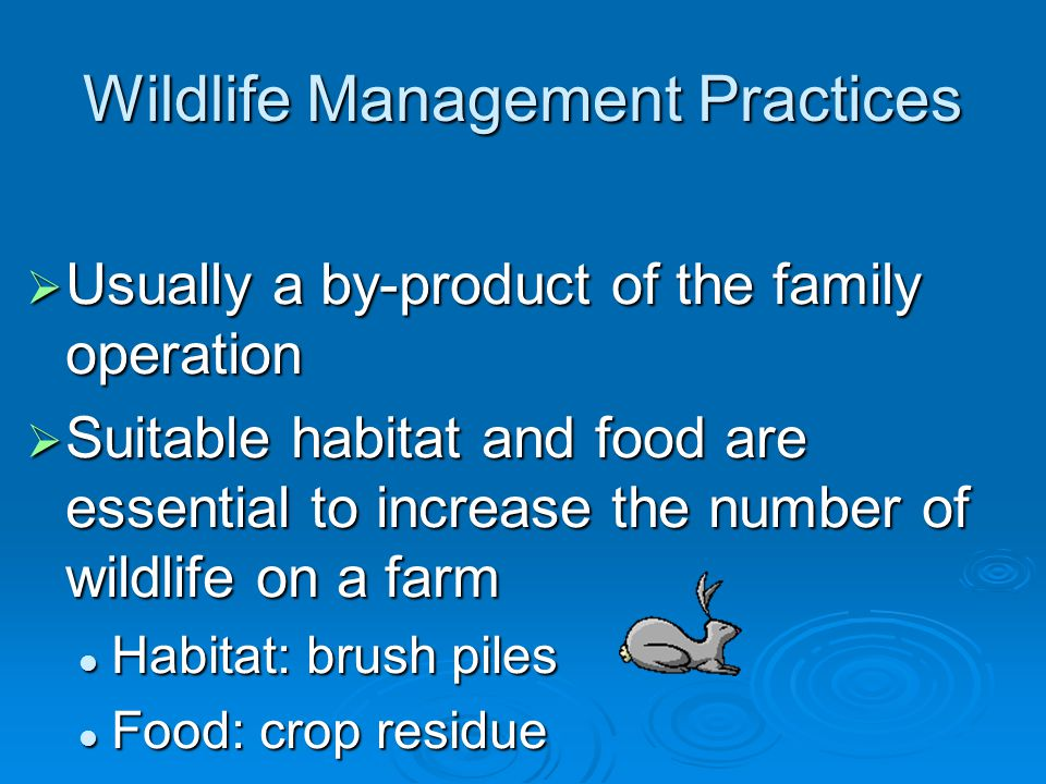 Wildlife Management Practices  Usually a by-product of the family operation  Suitable habitat and food are essential to increase the number of wildlife on a farm Habitat: brush piles Habitat: brush piles Food: crop residue Food: crop residue