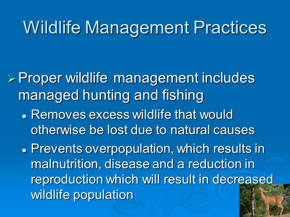 Wildlife Management Practices  Proper wildlife management includes managed hunting and fishing Removes excess wildlife that would otherwise be lost due to natural causes Removes excess wildlife that would otherwise be lost due to natural causes Prevents overpopulation, which results in malnutrition, disease and a reduction in reproduction which will result in decreased wildlife population Prevents overpopulation, which results in malnutrition, disease and a reduction in reproduction which will result in decreased wildlife population