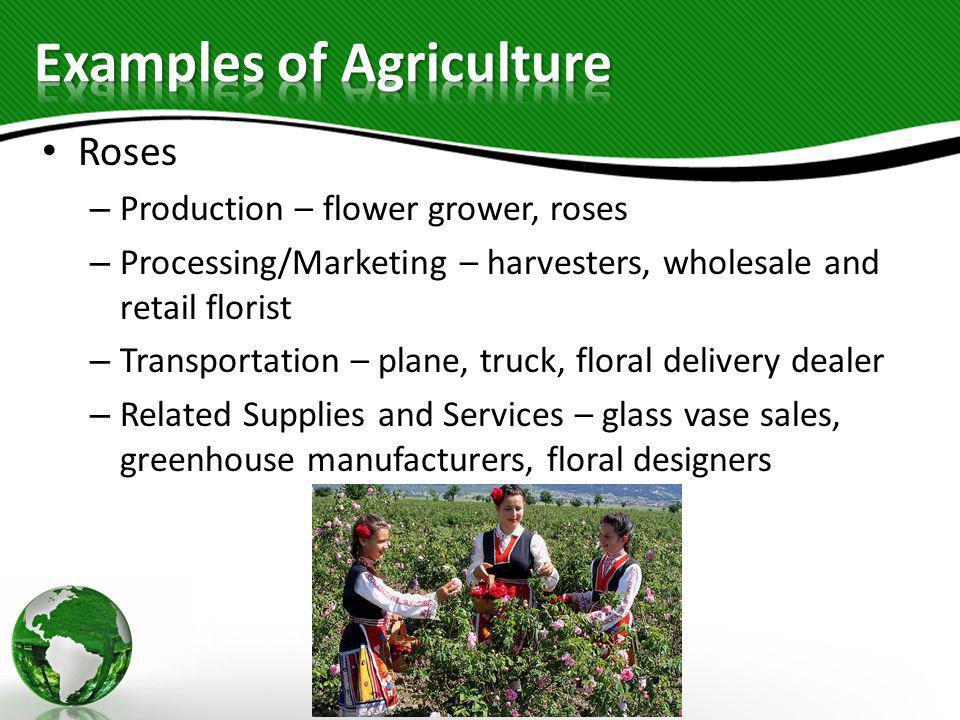 Roses – Production – flower grower, roses – Processing/Marketing – harvesters, wholesale and retail florist – Transportation – plane, truck, floral de