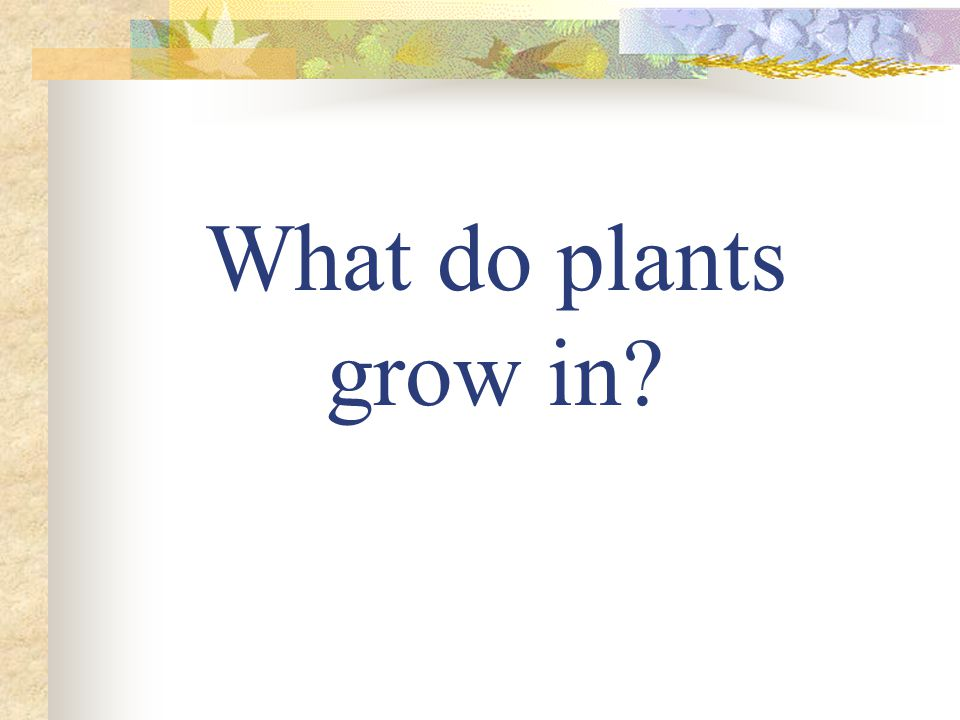 What do plants grow in?