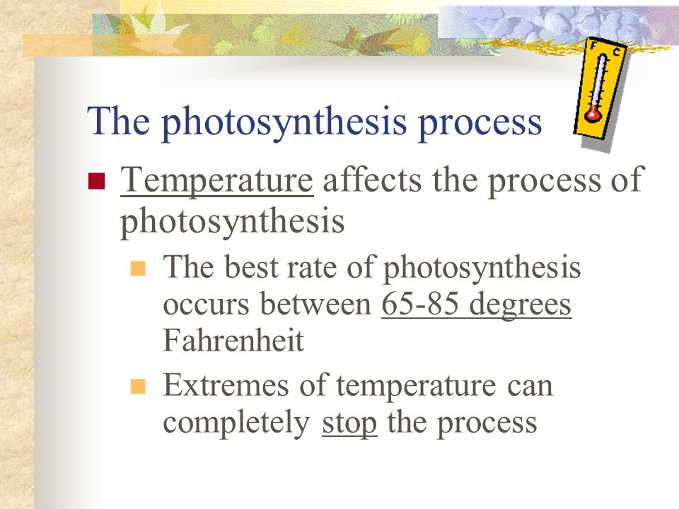 The photosynthesis process Temperature affects the process of photosynthesis The best rate of photosynthesis occurs between 65-85 degrees Fahrenheit E