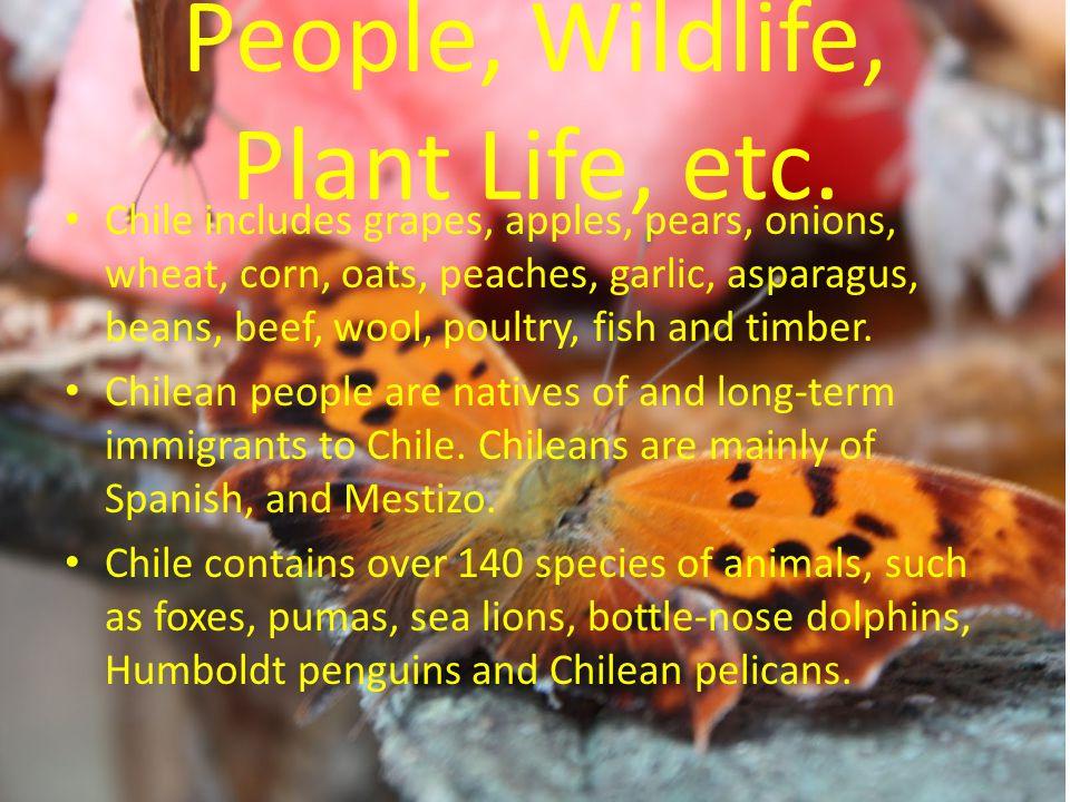 People, Wildlife, Plant Life, etc.