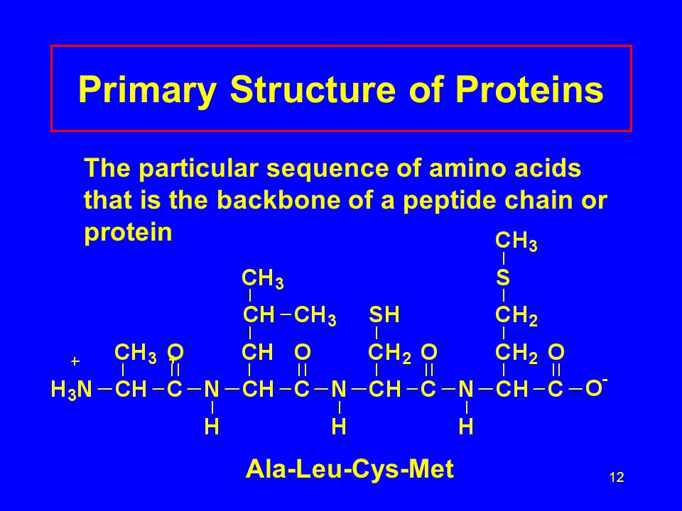12 Primary Structure of Proteins The particular sequence of amino acids that is the backbone of a peptide chain or protein Ala-Leu-Cys-Met