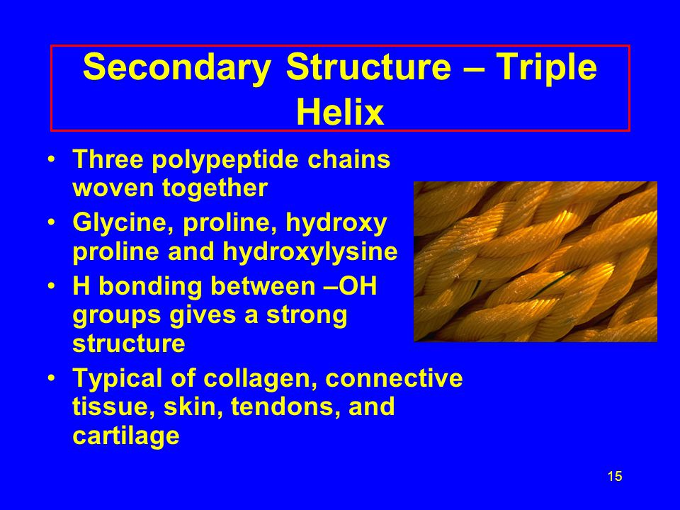 15 Secondary Structure – Triple Helix Three polypeptide chains woven together Glycine, proline, hydroxy proline and hydroxylysine H bonding between –OH groups gives a strong structure Typical of collagen, connective tissue, skin, tendons, and cartilage