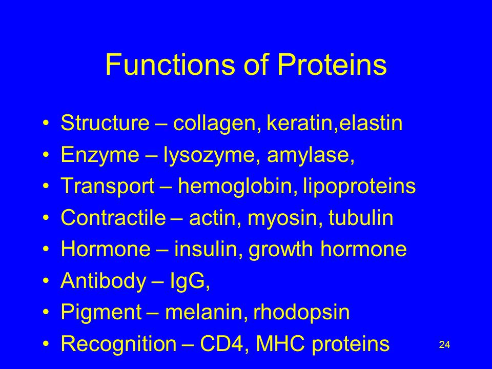 Functions of Proteins Structure – collagen, keratin,elastin Enzyme – lysozyme, amylase, Transport – hemoglobin, lipoproteins Contractile – actin, myosin, tubulin Hormone – insulin, growth hormone Antibody – IgG, Pigment – melanin, rhodopsin Recognition – CD4, MHC proteins 24