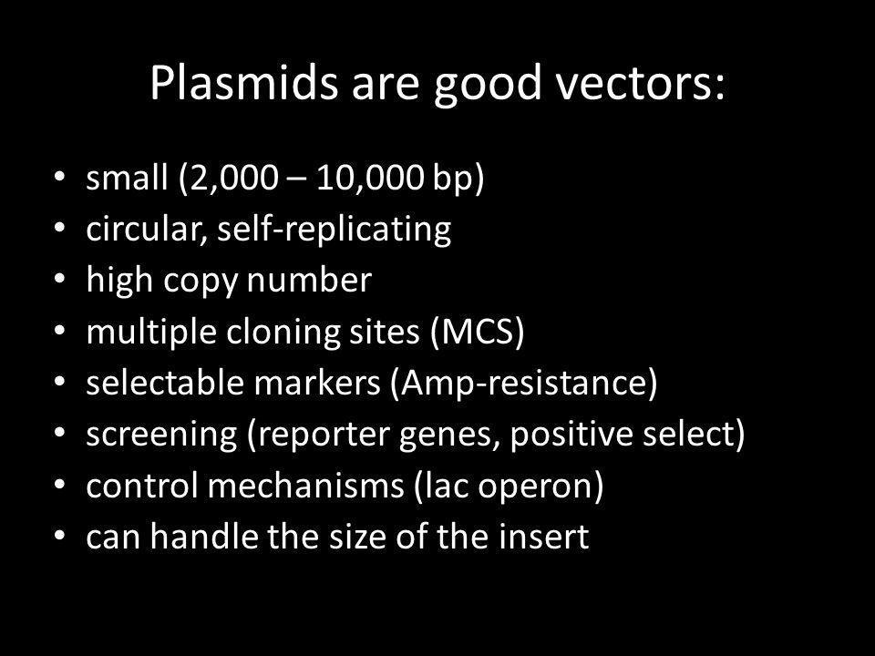 Plasmids are good vectors: small (2,000 – 10,000 bp) circular, self-replicating high copy number multiple cloning sites (MCS) selectable markers (Amp-