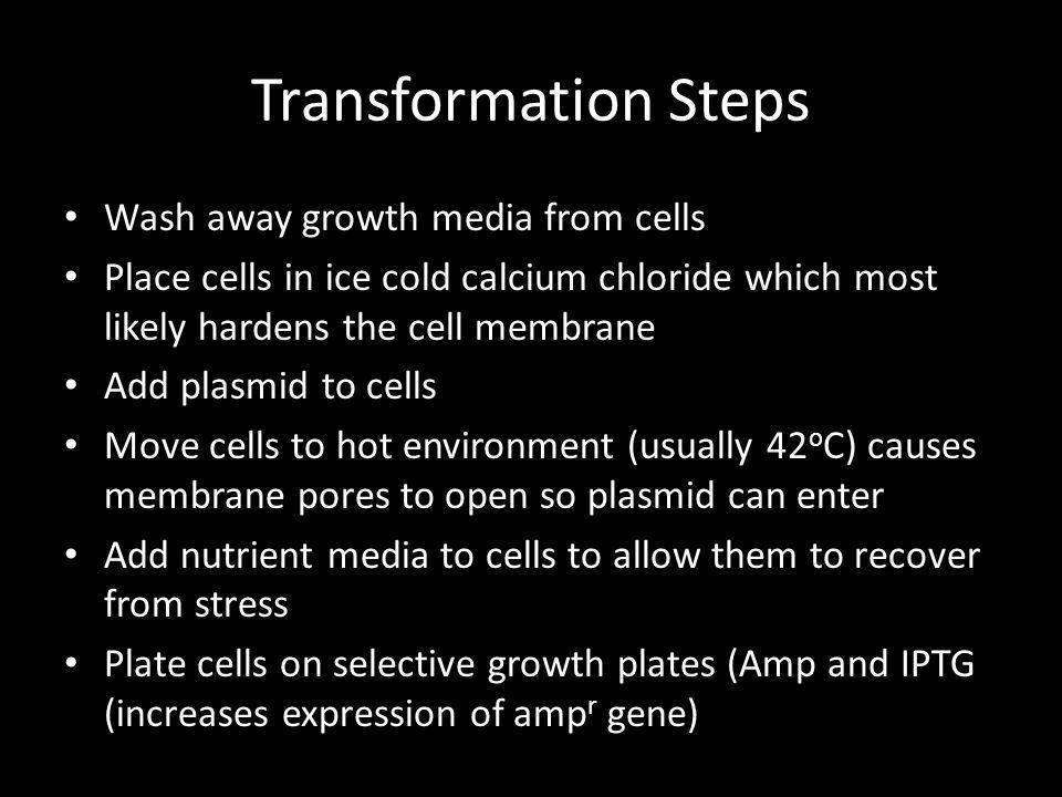 Transformation Steps Wash away growth media from cells Place cells in ice cold calcium chloride which most likely hardens the cell membrane Add plasmi