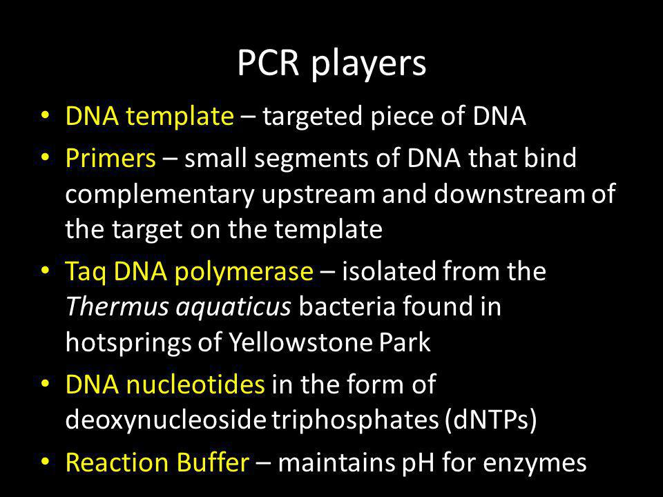 PCR purification Small impurities can have a negative effect on the ligation of the PCR product to vector DNA Impurities include unincorporated dNTPs, polymerases, primers and small primer- dimers.