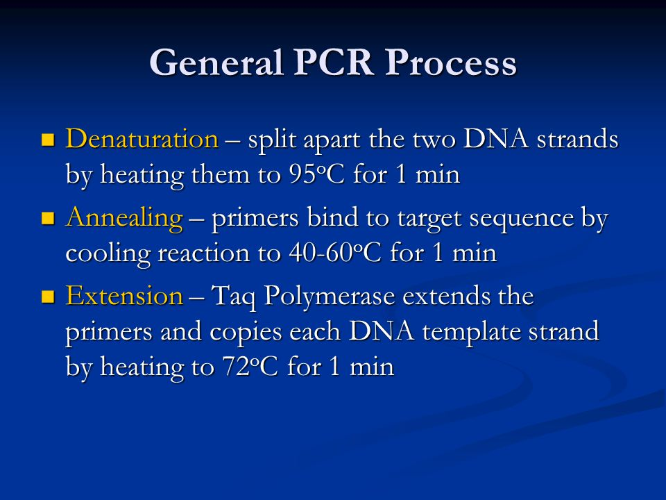 General PCR Process Denaturation – split apart the two DNA strands by heating them to 95 o C for 1 min Denaturation – split apart the two DNA strands