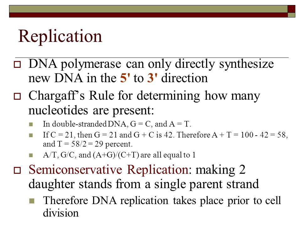 Replication  DNA polymerase can only directly synthesize new DNA in the 5' to 3' direction  Chargaff's Rule for determining how many nucleotides are