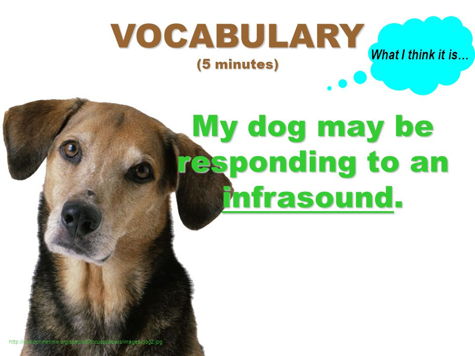 infrasound (n): sound waves with frequencies lower than what we normally hear VOCABULARY (5 minutes) http://radioprimetime.org/specials/focusspecials/images/dog2.jpg