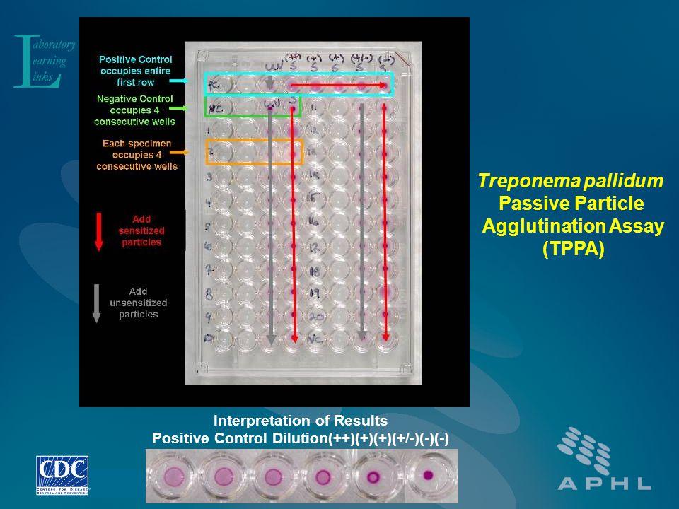 Interpretation of Results Positive Control Dilution(++)(+)(+)(+/-)(-)(-) Treponema pallidum Passive Particle Agglutination Assay (TPPA)