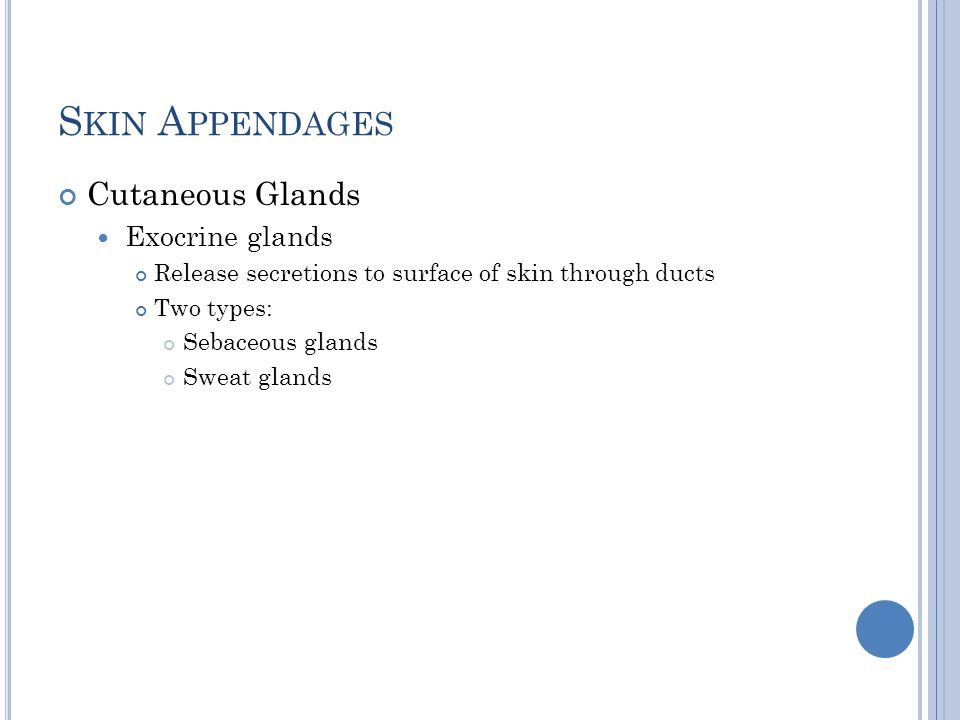 S KIN A PPENDAGES Cutaneous Glands Exocrine glands Release secretions to surface of skin through ducts Two types: Sebaceous glands Sweat glands