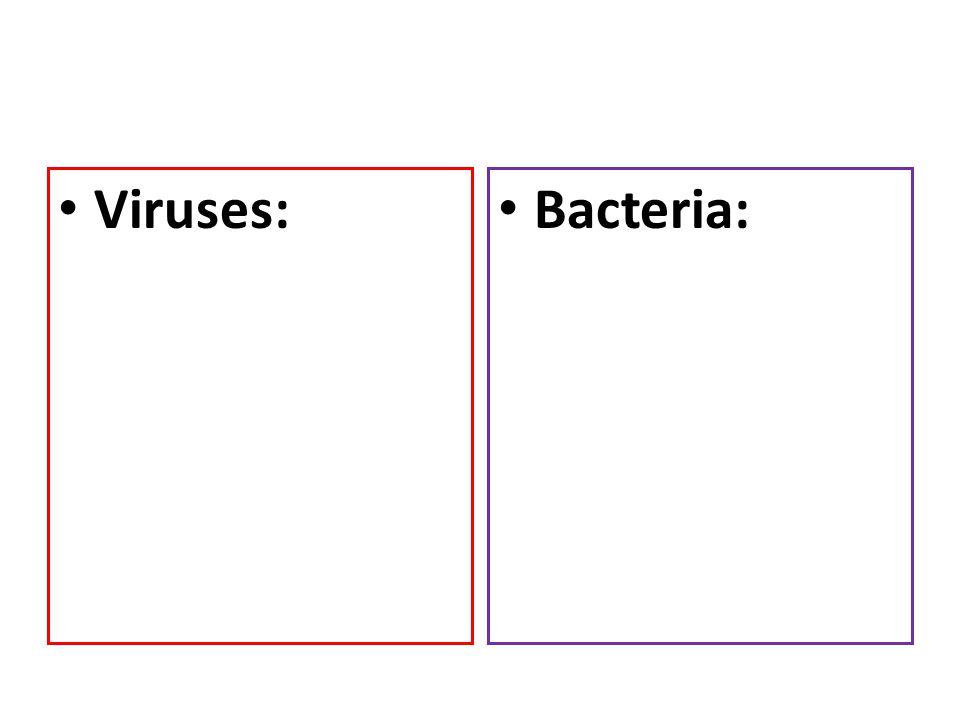 Viruses: – Can cause disease Bacteria: