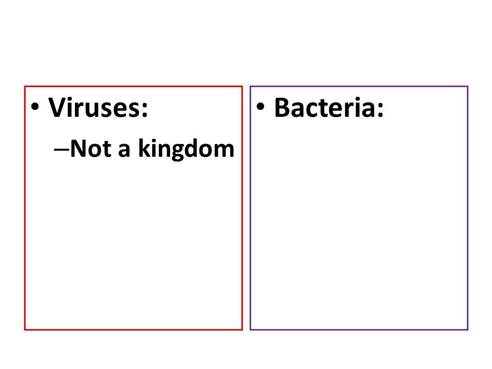 Viruses: – Not a kingdom Bacteria: