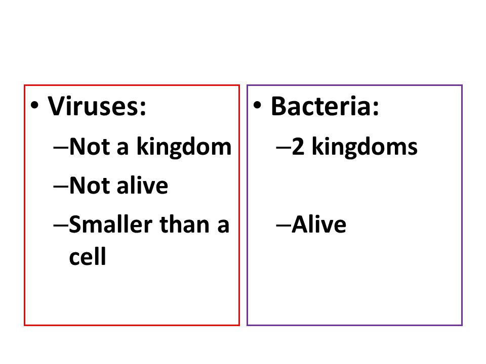 Viruses: – Not a kingdom – Not alive – Smaller than a cell Bacteria: – 2 kingdoms – Alive