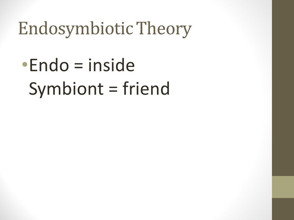 Endosymbiotic Theory Endo = inside Symbiont = friend
