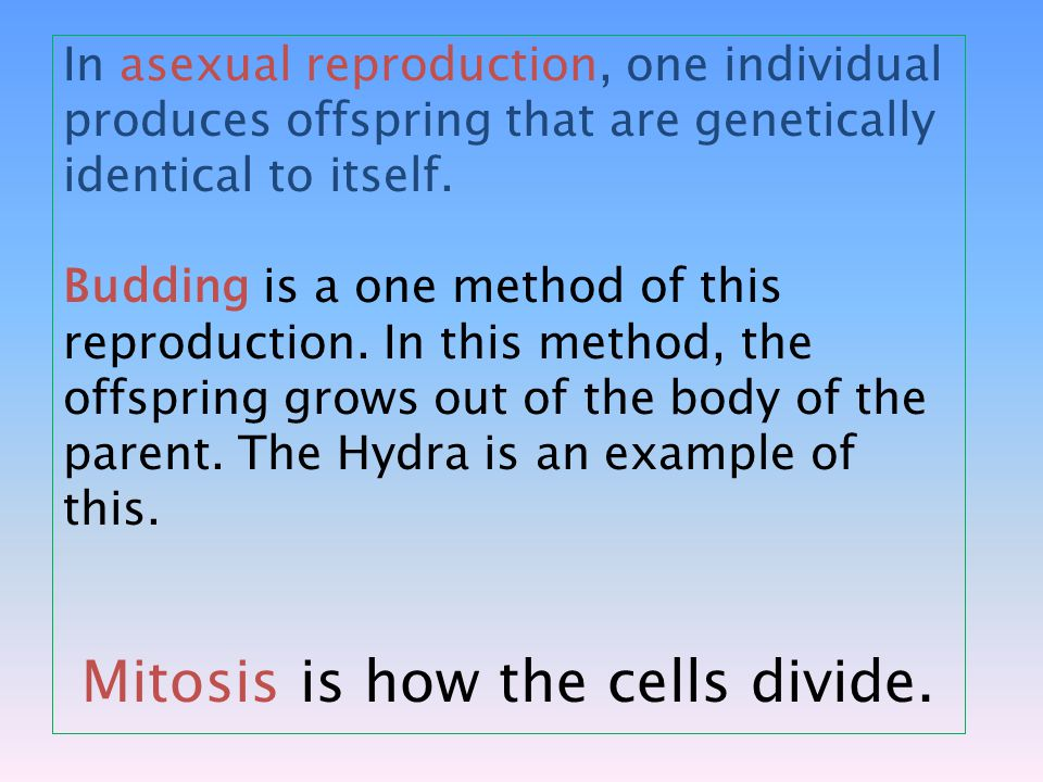 In asexual reproduction, one individual produces offspring that are genetically identical to itself.