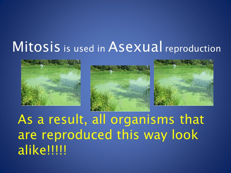 Why is there more variation in offspring that result from sexual reproduction than asexual reproduction?