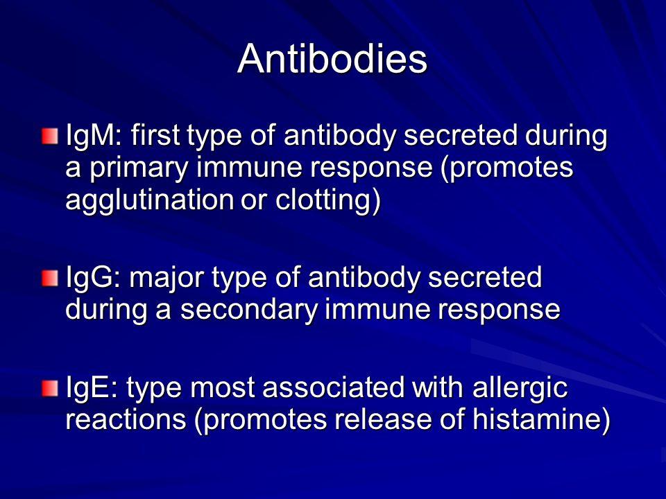 Antibodies IgM: first type of antibody secreted during a primary immune response (promotes agglutination or clotting) IgG: major type of antibody secr