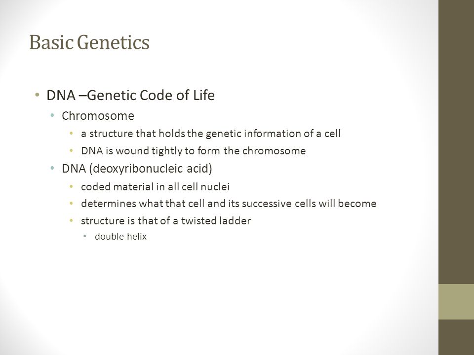 Basic Genetics DNA –Genetic Code of Life Chromosome a structure that holds the genetic information of a cell DNA is wound tightly to form the chromoso