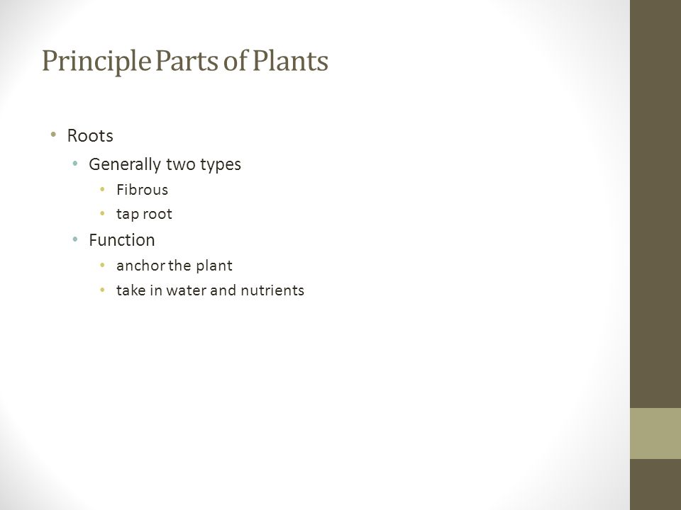 Principle Parts of Plants Roots Generally two types Fibrous tap root Function anchor the plant take in water and nutrients