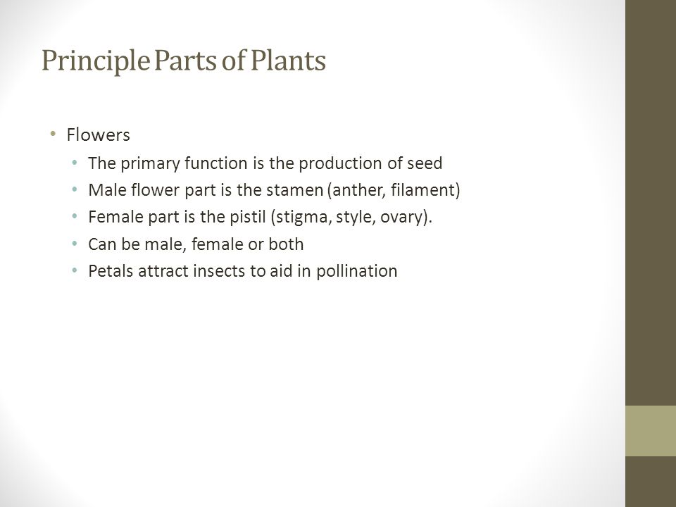 Principle Parts of Plants Flowers The primary function is the production of seed Male flower part is the stamen (anther, filament) Female part is the