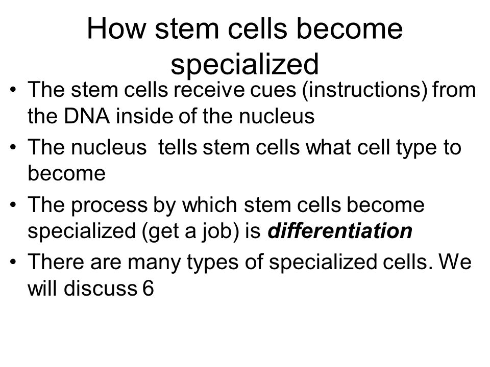 How stem cells become specialized The stem cells receive cues (instructions) from the DNA inside of the nucleus The nucleus tells stem cells what cell type to become The process by which stem cells become specialized (get a job) is differentiation There are many types of specialized cells.