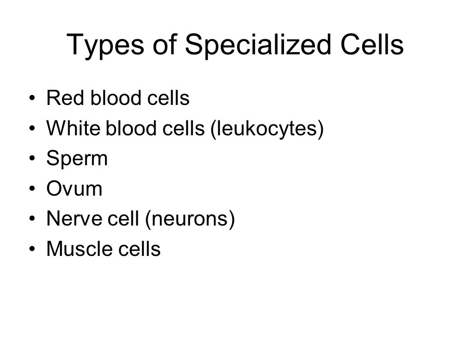 Types of Specialized Cells Red blood cells White blood cells (leukocytes) Sperm Ovum Nerve cell (neurons) Muscle cells