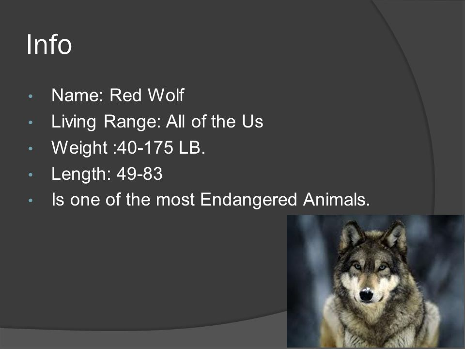 Info Name: Red Wolf Living Range: All of the Us Weight : LB.