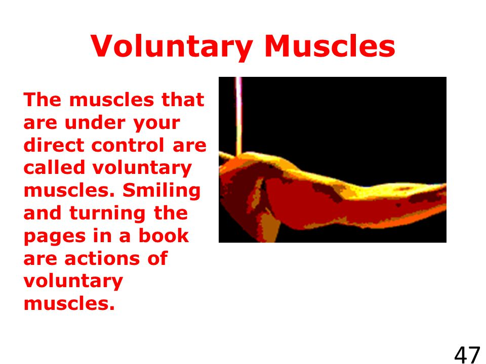 Cardiac Muscle 46 Cardiac muscles are involuntary muscles found only in the heart.