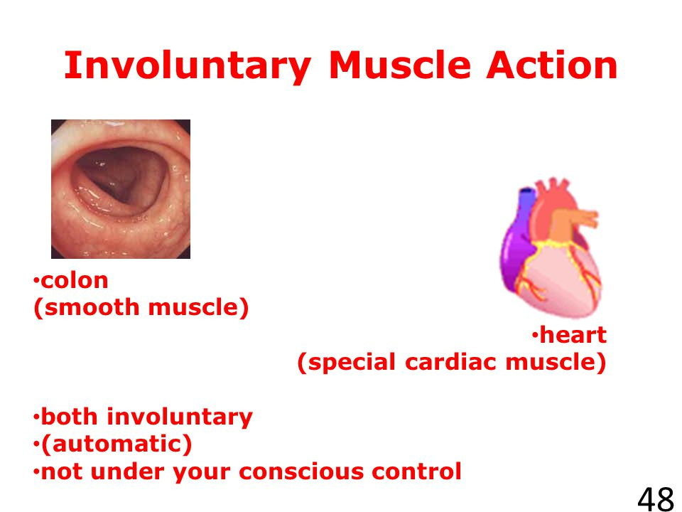 Voluntary Muscles 47 The muscles that are under your direct control are called voluntary muscles. Smiling and turning the pages in a book are actions