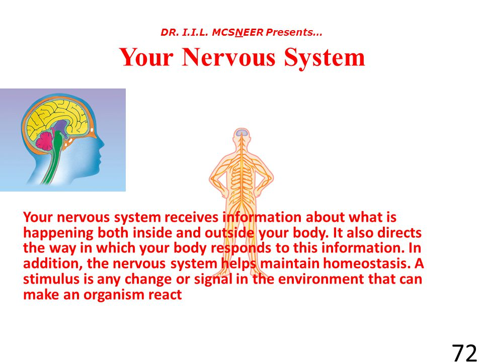 It's on to the Nervous System 71