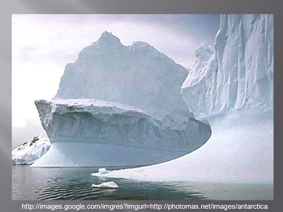 http://images.google.com/imgres?imgurl=http://photomas.net/images/antarctica