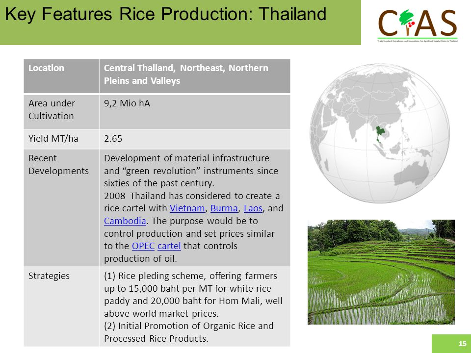LocationCentral Thailand, Northeast, Northern Pleins and Valleys Area under Cultivation 9,2 Mio hA Yield MT/ha2.65 Recent Developments Development of material infrastructure and green revolution instruments since sixties of the past century.
