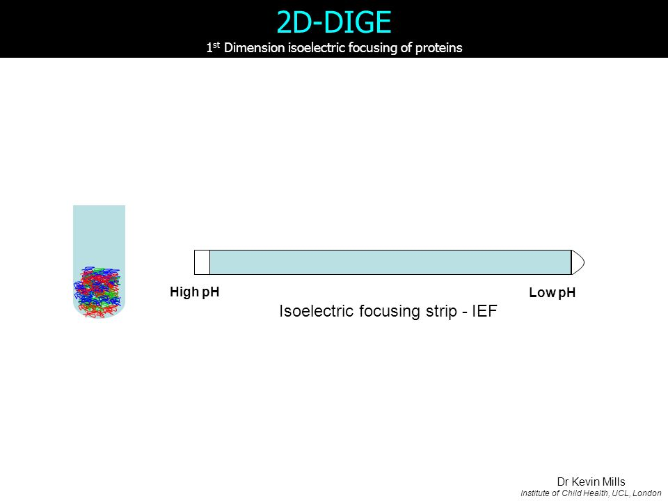 Isoelectric focusing strip - IEF High pH Low pH 2D-DIGE 1 st Dimension isoelectric focusing of proteins Dr Kevin Mills Institute of Child Health, UCL, London