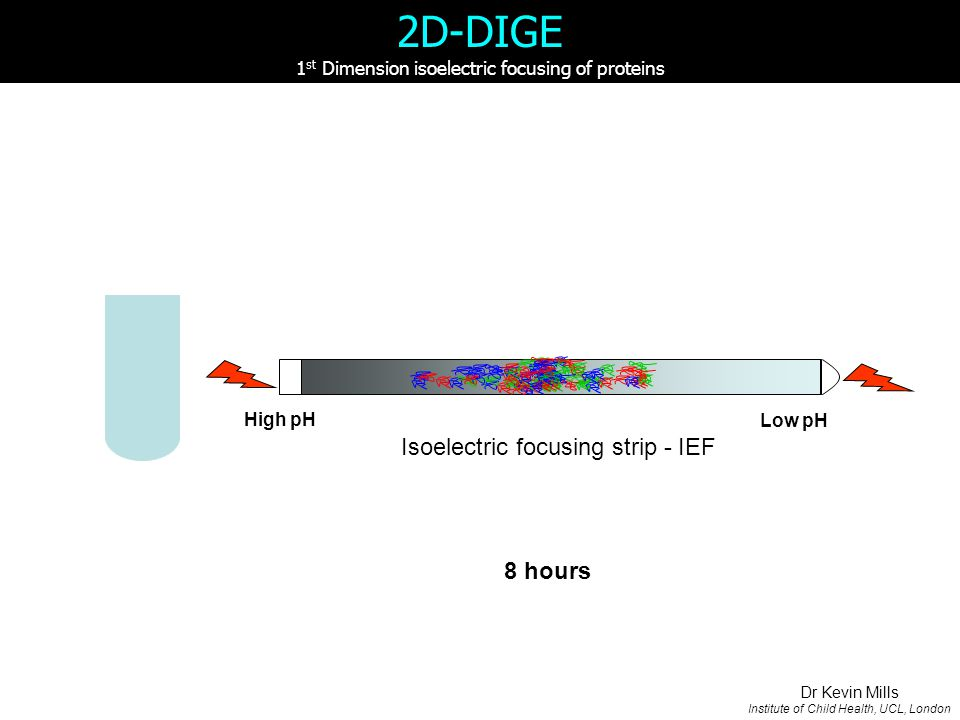 Isoelectric focusing strip - IEF High pH Low pH 8 hours 2D-DIGE 1 st Dimension isoelectric focusing of proteins Dr Kevin Mills Institute of Child Health, UCL, London