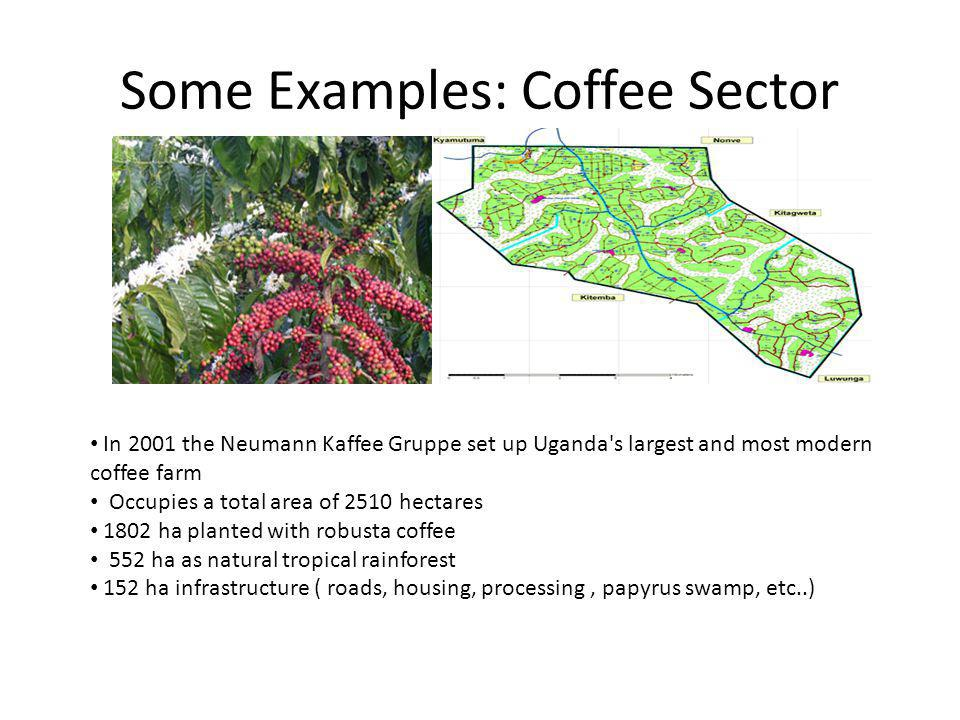 Some Examples: Coffee Sector In 2001 the Neumann Kaffee Gruppe set up Uganda s largest and most modern coffee farm Occupies a total area of 2510 hectares 1802 ha planted with robusta coffee 552 ha as natural tropical rainforest 152 ha infrastructure ( roads, housing, processing, papyrus swamp, etc..)