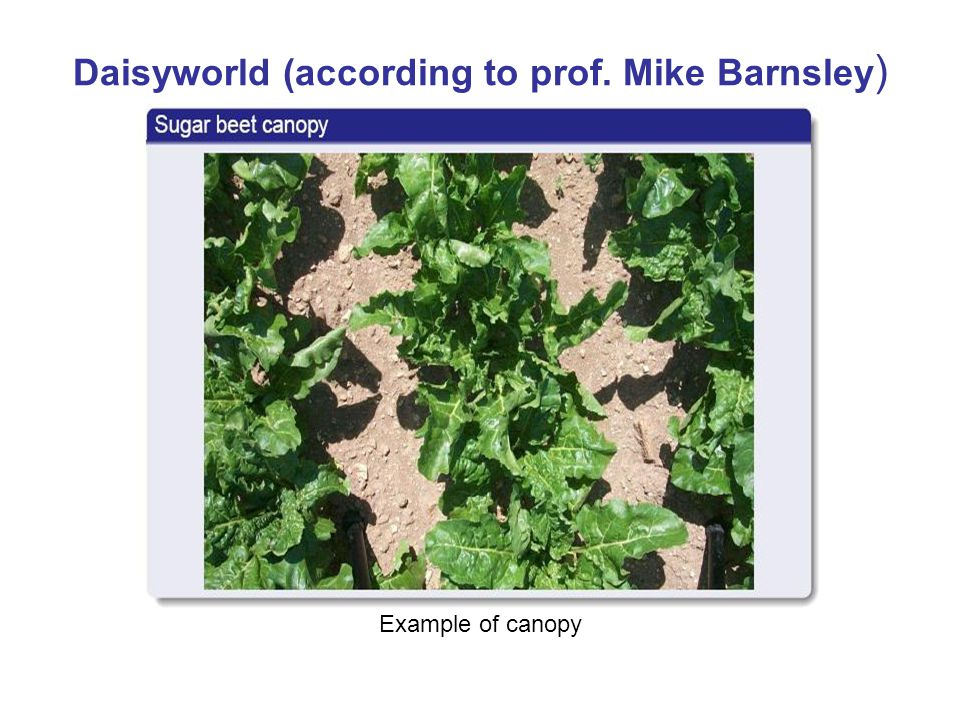 Daisyworld (according to prof. Mike Barnsley ) Example of canopy