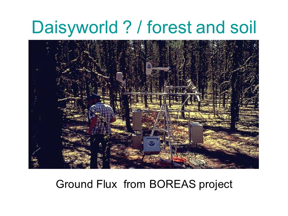 Daisyworld ? / forest and soil Ground Flux from BOREAS project