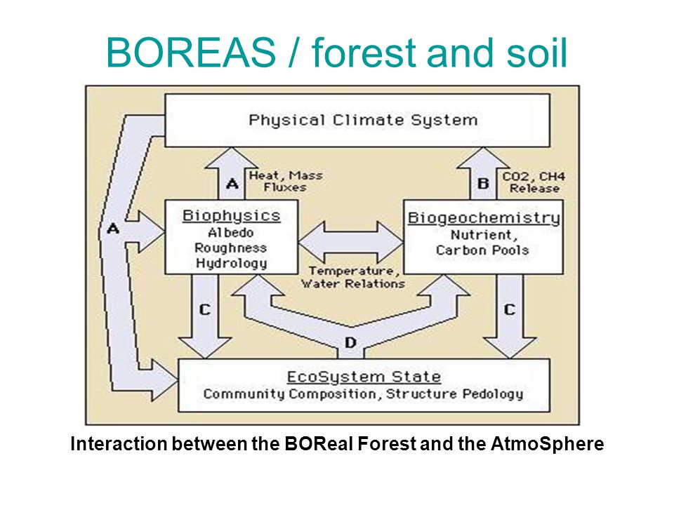 BOREAS / forest and soil Interaction between the BOReal Forest and the AtmoSphere
