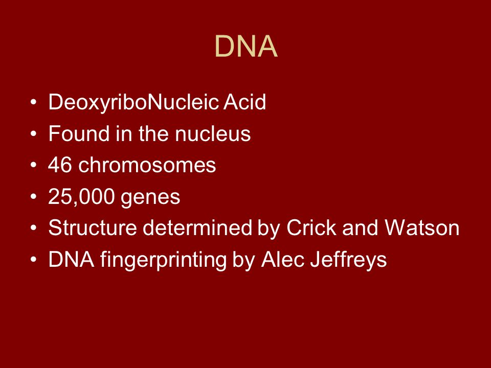 DNA DeoxyriboNucleic Acid Found in the nucleus 46 chromosomes 25,000 genes Structure determined by Crick and Watson DNA fingerprinting by Alec Jeffrey