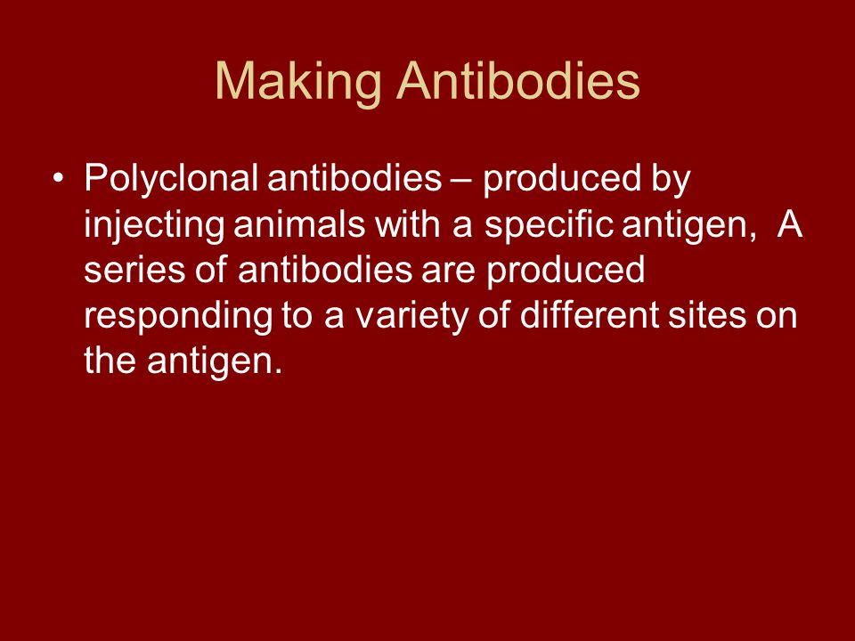 Making Antibodies Polyclonal antibodies – produced by injecting animals with a specific antigen, A series of antibodies are produced responding to a v