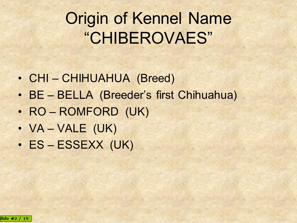 Origin of Kennel Name CHIBEROVAES CHI – CHIHUAHUA (Breed) BE – BELLA (Breeder's first Chihuahua) RO – ROMFORD (UK) VA – VALE (UK) ES – ESSEXX (UK) © 2013, Paul Myers | Vale Romana | Slide #2 / 19