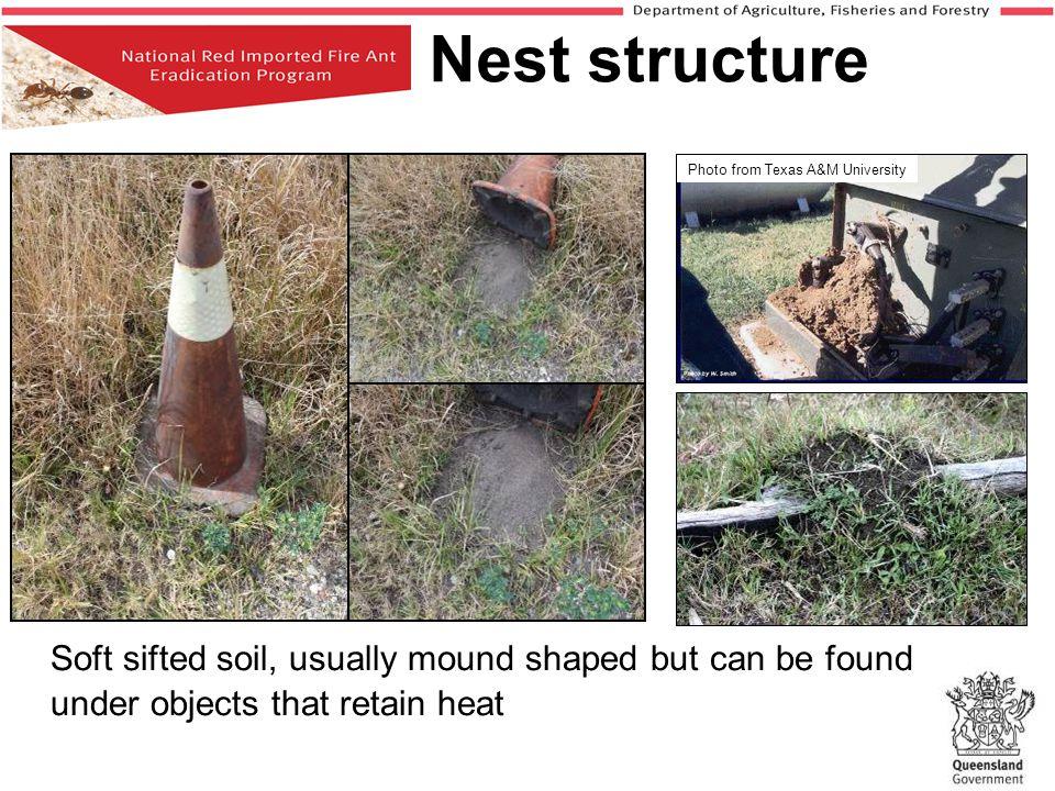 Nest disturbance