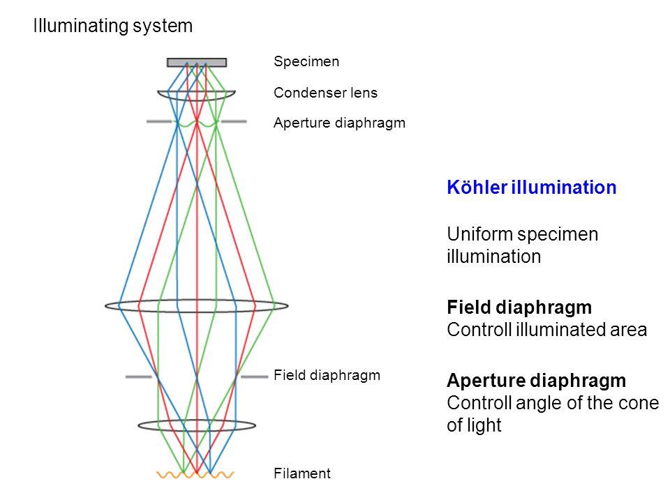 Illuminating system Specimen Filament Field diaphragm Aperture diaphragm Condenser lens Köhler illumination Uniform specimen illumination Field diaphr