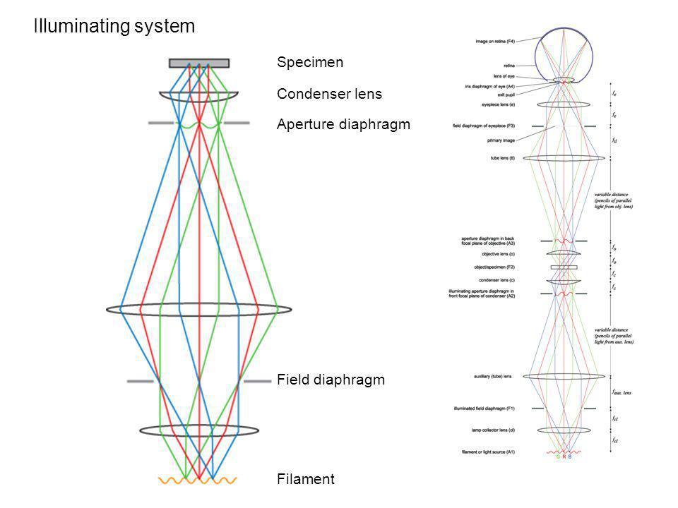 Illuminating system Specimen Filament Field diaphragm Aperture diaphragm Condenser lens