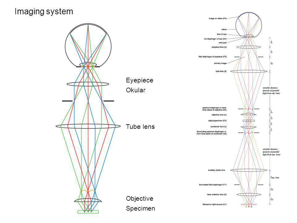 Imaging system Specimen Objective Tube lens Eyepiece Okular