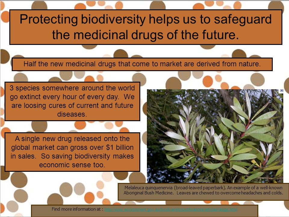 Protecting biodiversity helps us to safeguard the medicinal drugs of the future. Half the new medicinal drugs that come to market are derived from nat