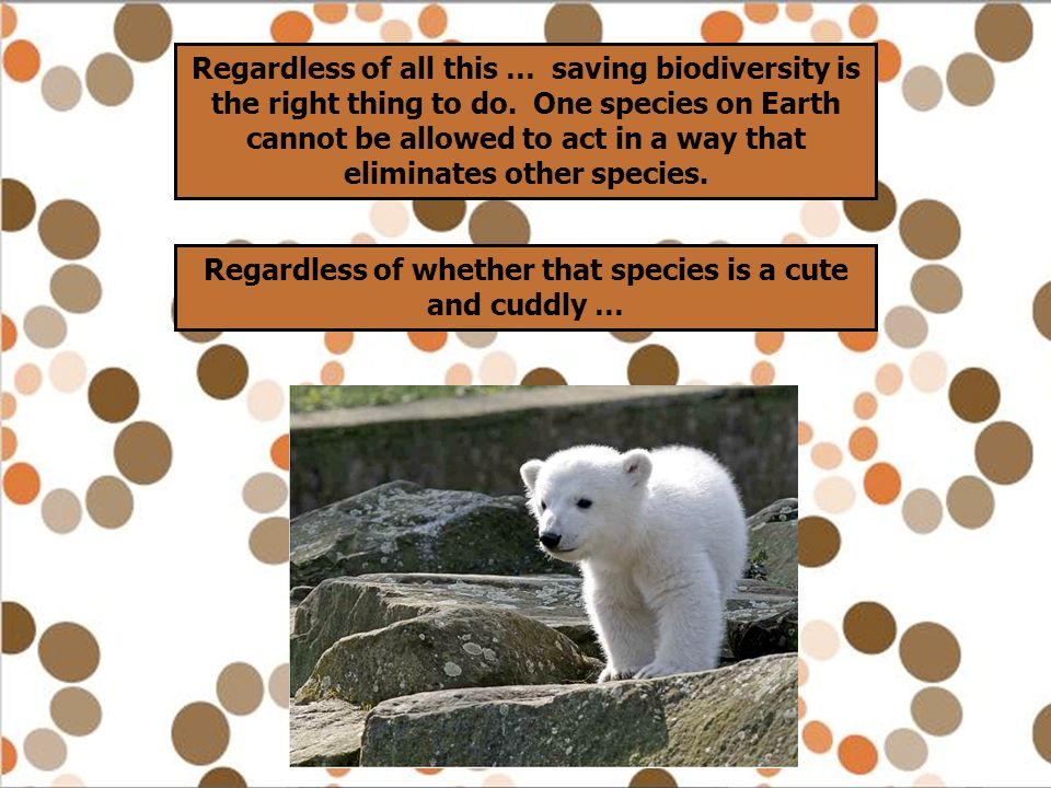 Regardless of all this … saving biodiversity is the right thing to do. One species on Earth cannot be allowed to act in a way that eliminates other sp